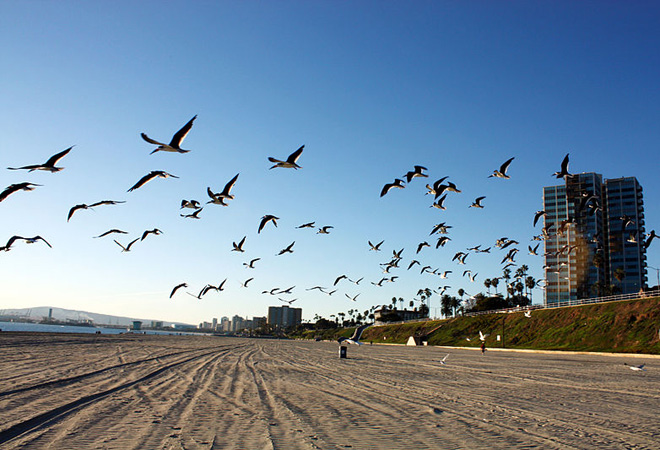 Long_Beach_California_Bird_h