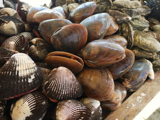 how to prepare blood clams