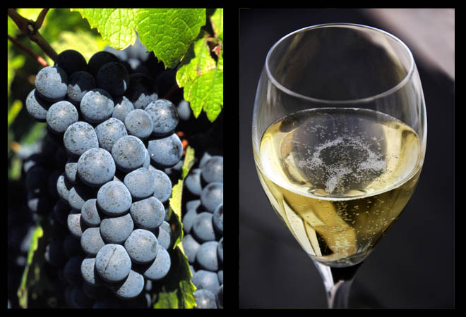 BlackGrapesWhiteWine