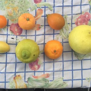 Mud Creek Ranch specializes in citrus.