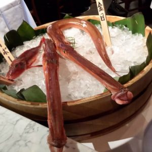 Chaya Downtown gets twice-weekly shipments from Japan that could include exotic selections like red cornetfish.