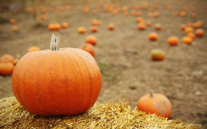 Your Handpicked Guide To L A S Best Pumpkin Patches Los Angeles Magazine
