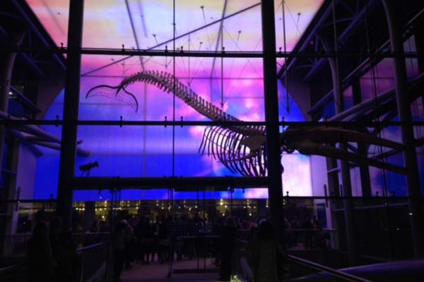 A night at the Natural History Museum