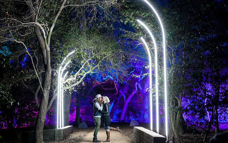 Fantasy Forest is just one light installation at Descanso Gardens