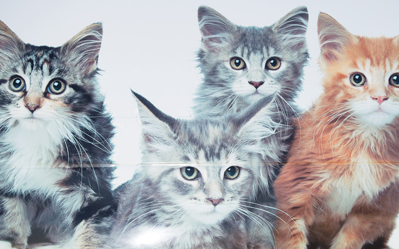 How Long Do Feral Cats Stay With Their Kittens