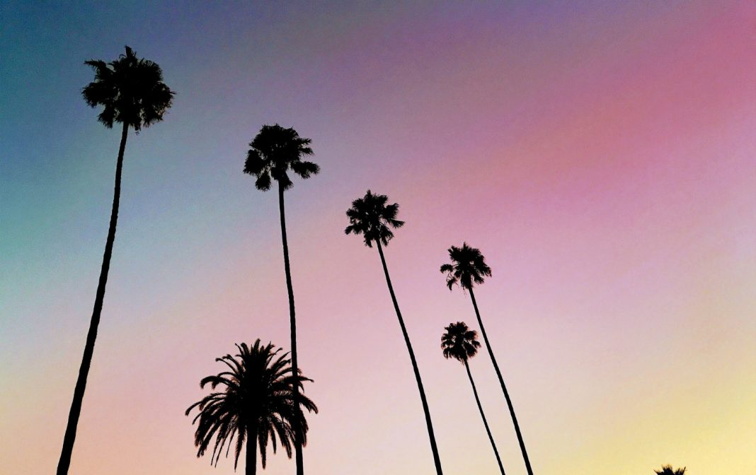 palm trees los angeles sunset